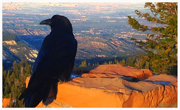 Crow at Bryce Canyon Happy Trails Adventure