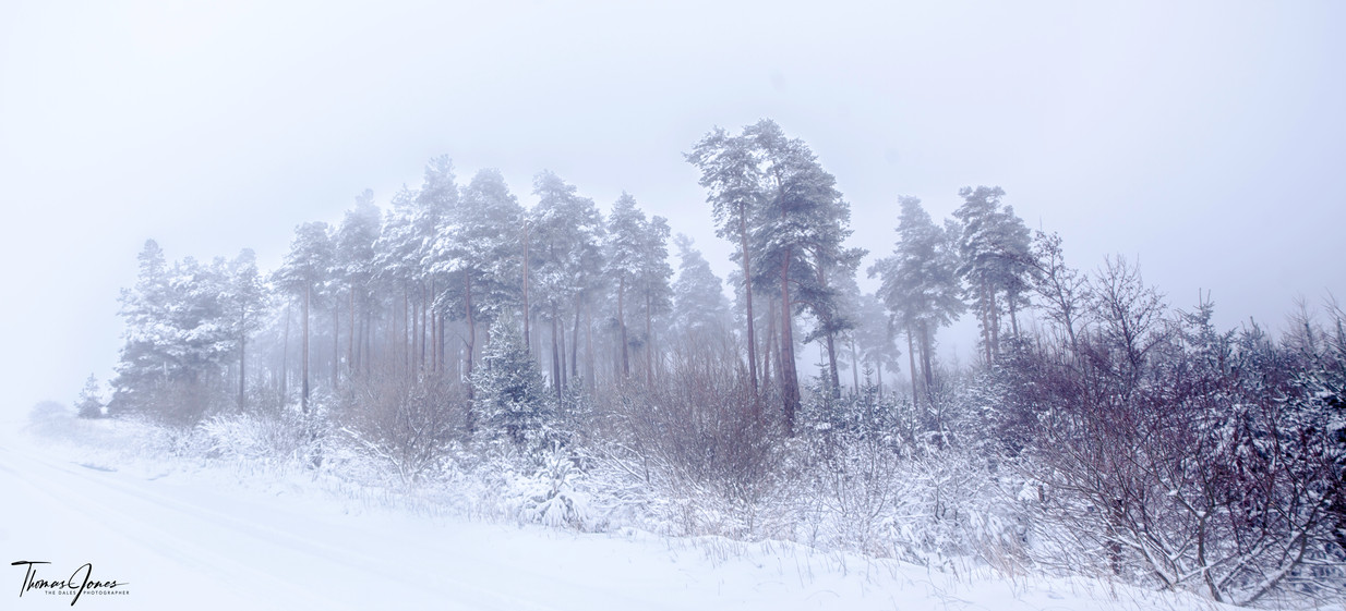 Winter's Solace