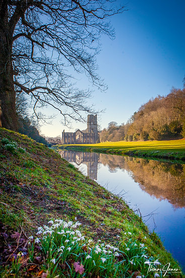 Fountains Abbey   Spring