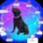 Dog Health Monitor Sensors