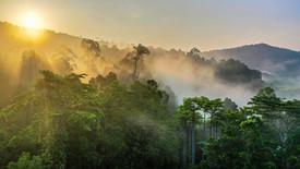 Sunrise Mist and Fog Rays