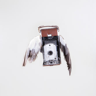 Flock of Film