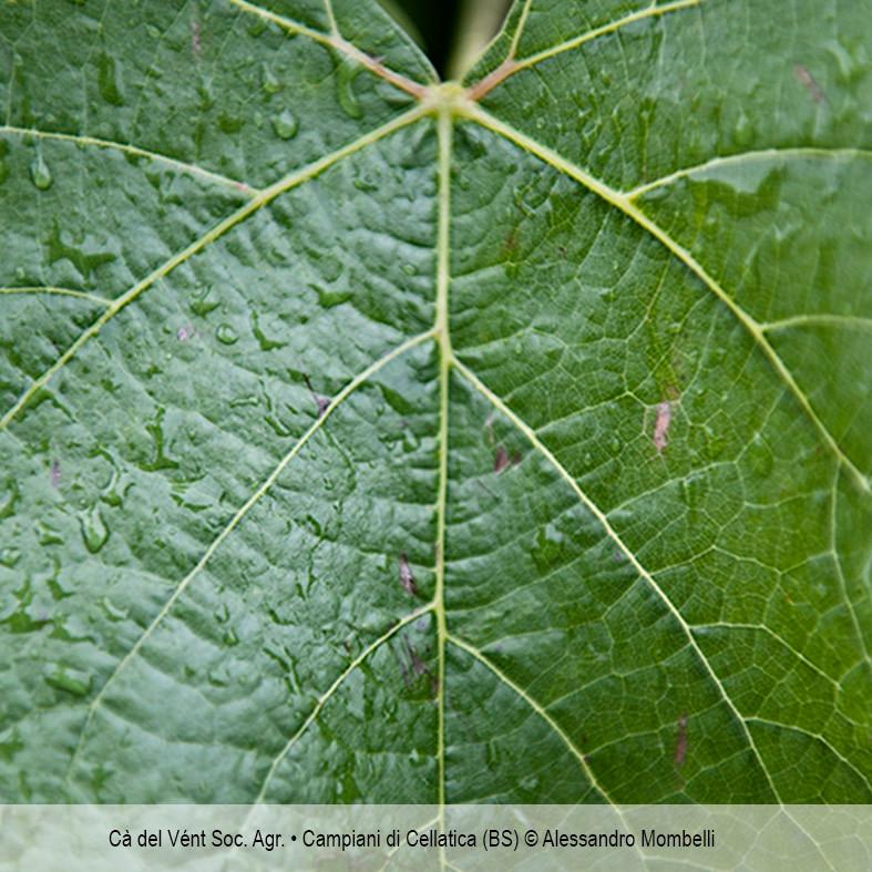 Cà del Vént Soc. Agr. • Campiani di Cellatica (BS)