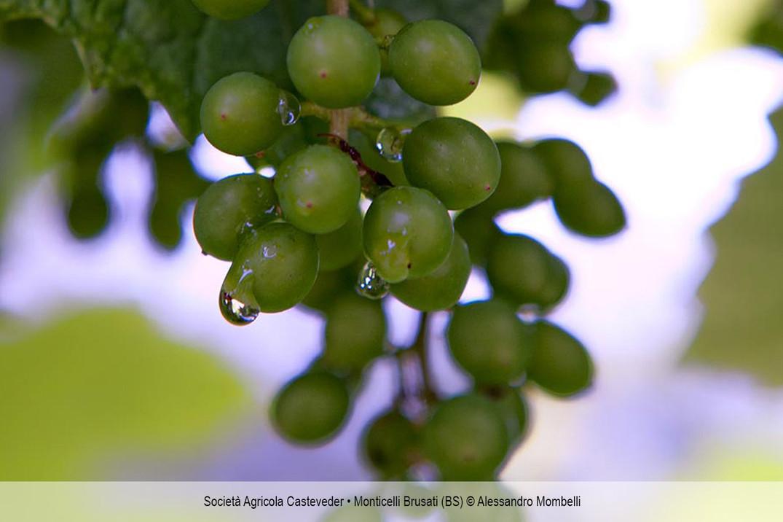 Società Agricola Casteveder • Monticelli Brusati (BS)