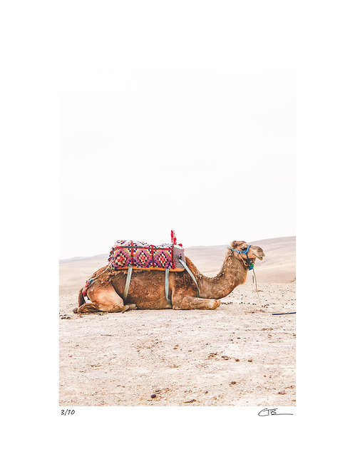 Cara the Camel: Morocco