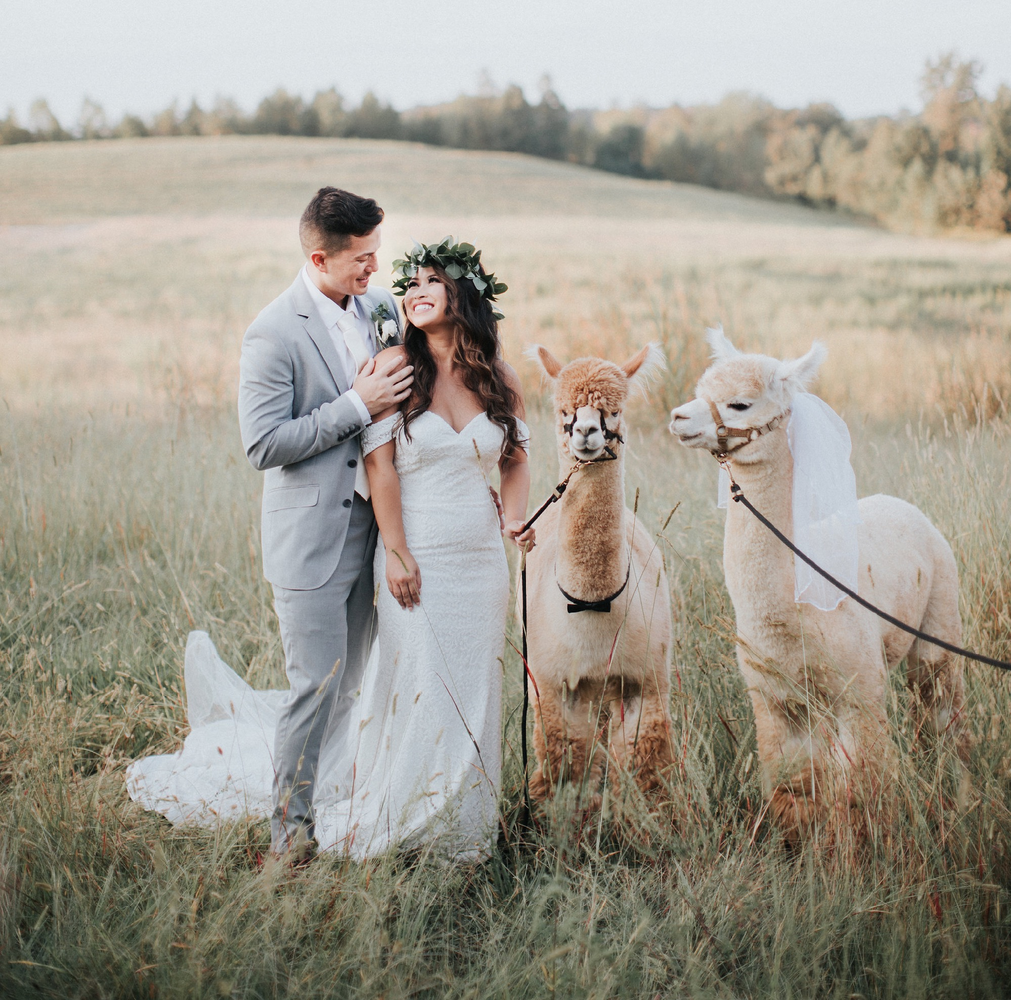 Beautiful Boho Wedding with Lamas