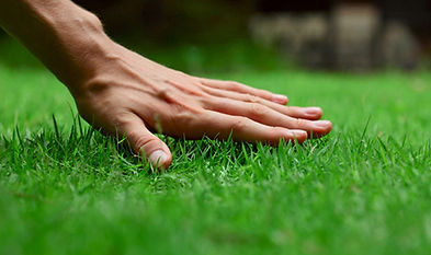 D&D Lawn Care LLC Maryland Professional Lawn Maintenance & Landscaping