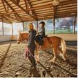 Horse/Pony Riding Lesson