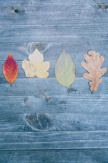Hello autumn!