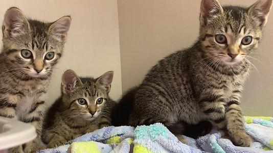 KittenGroup.jpg