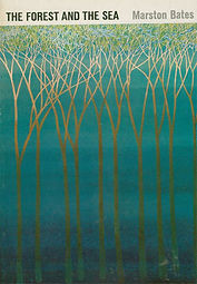 forest-sea.jpg
