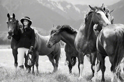 Heather's Horses