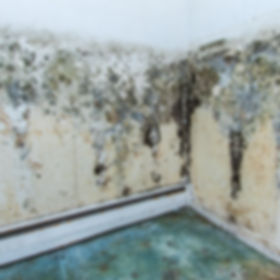 Water damage causing mold growth on the