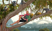 koalasfaceoftourism.png