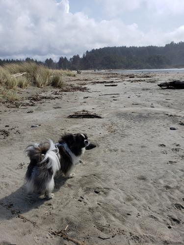 Pako's Beach Adventure