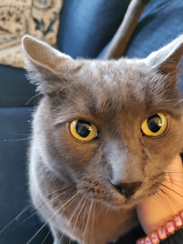 Cat Client