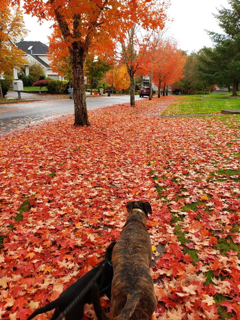 Fall Walkies