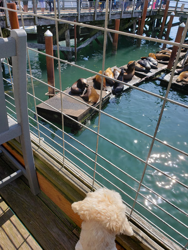 Cooper vs Sea lions