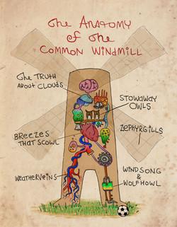 Another useful Anatomy