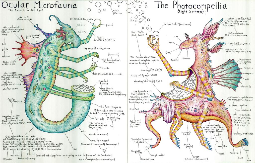 Ocular Microfauna: Photocompellia