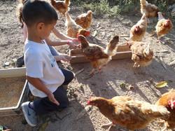 """On va nourrir """"Les poules"""""""