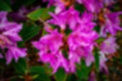flowers-4161830_1920.jpg