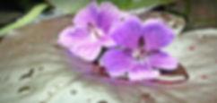 water-lilies-1445546_1920.jpg
