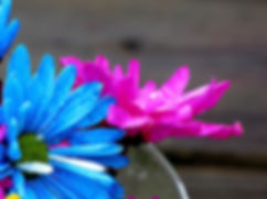 daisies-52603_1920.jpg