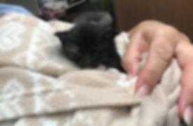 Tiny Newborn Baby Kitten