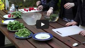 Vom Schulhof in den Kochtopf - Mit Heilkräutern kochen