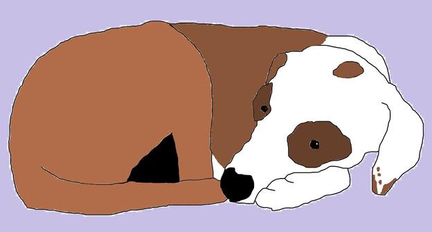 Derby Dog Doodle