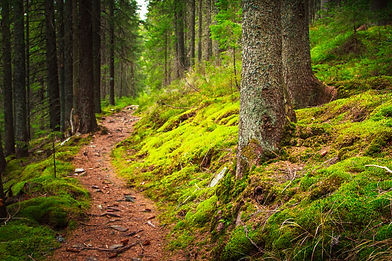 DT Forest Path.jpg