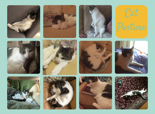 What's Your Purr-fect Posture?