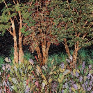 Bushland Bloom, 2019  92 x 87 cm  Free motion machine stitching on bleach painted fabric, acrylic marker, wadding