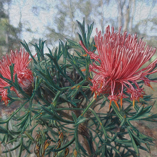 Out Back Pink, 2019  50 x 61 cm  Embellished inkjet canvas photographic print, free motion machine stitching, wadding