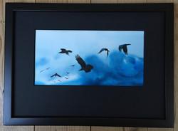 Ravens 10 - SOLD