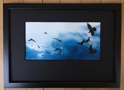 Ravens 9 - SOLD
