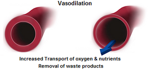 vasodilation-2.png