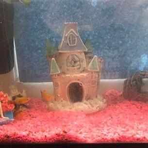 Tweenies (Fish)