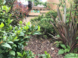 Eden Garden (Plants + Insects)