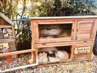Pre-School (Rabbit Hutch)