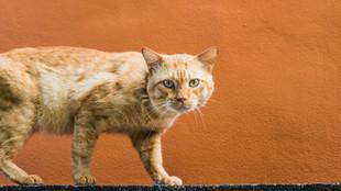 Gatos no muro