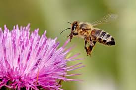 Bees love flowers, flowers need bees, what's the problem?