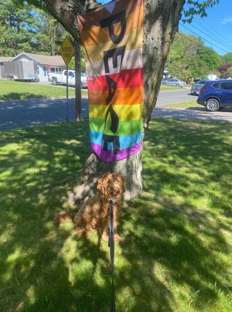 peace-flag-dog-764x1024.jpg