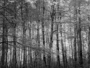 Schurhammerhütte_120715_AF_014.jpg