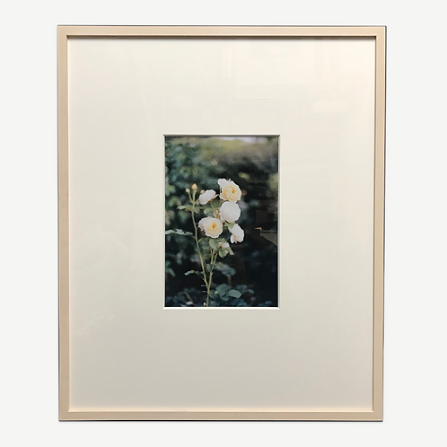 Print in Wooden Frame|White roses