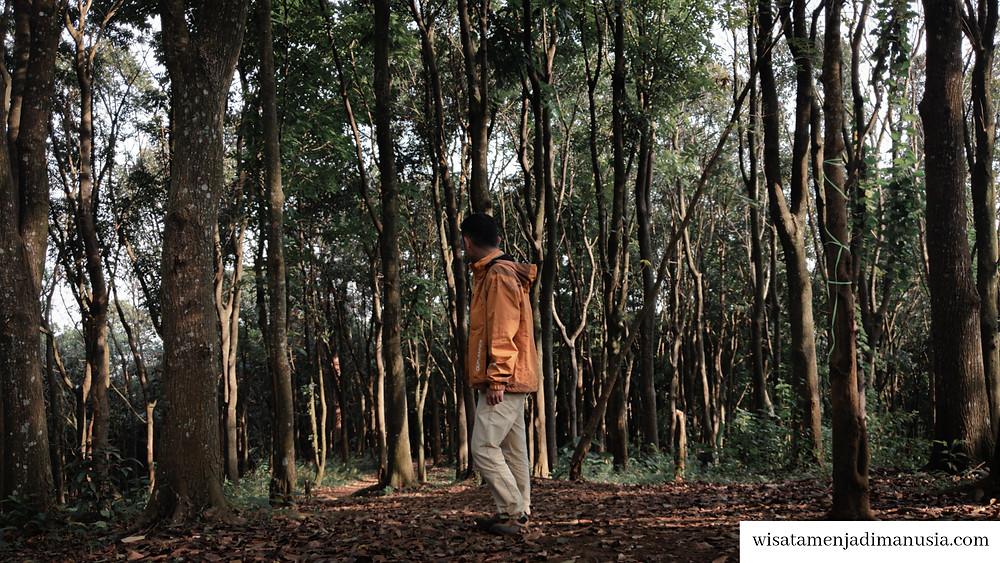 Hutan di Bukit Watu Jengger yang dilewati untuk pendakian