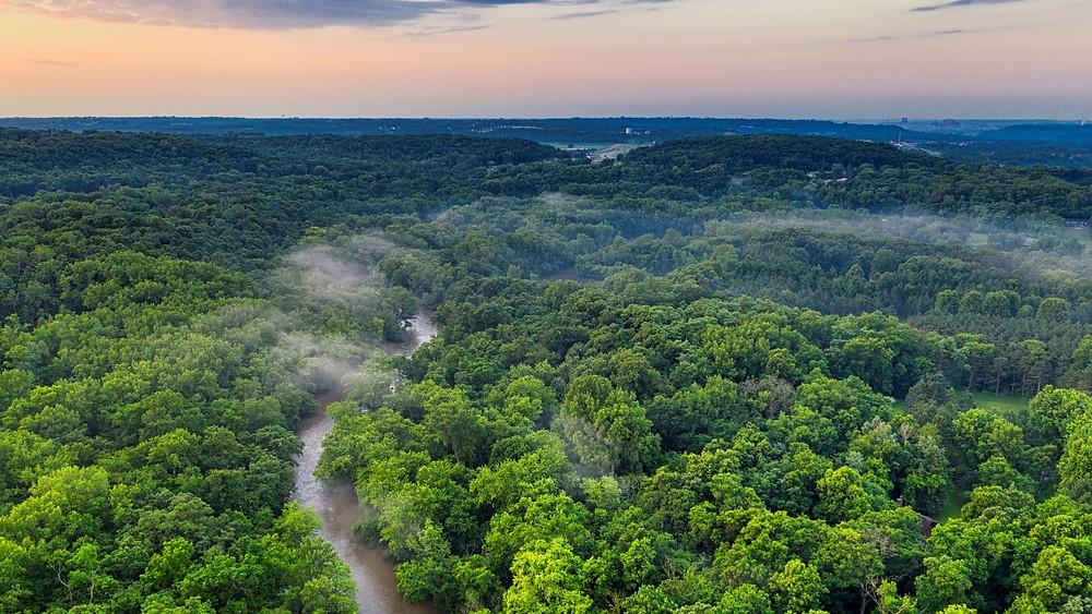 Gambaran Hamparan Hutan