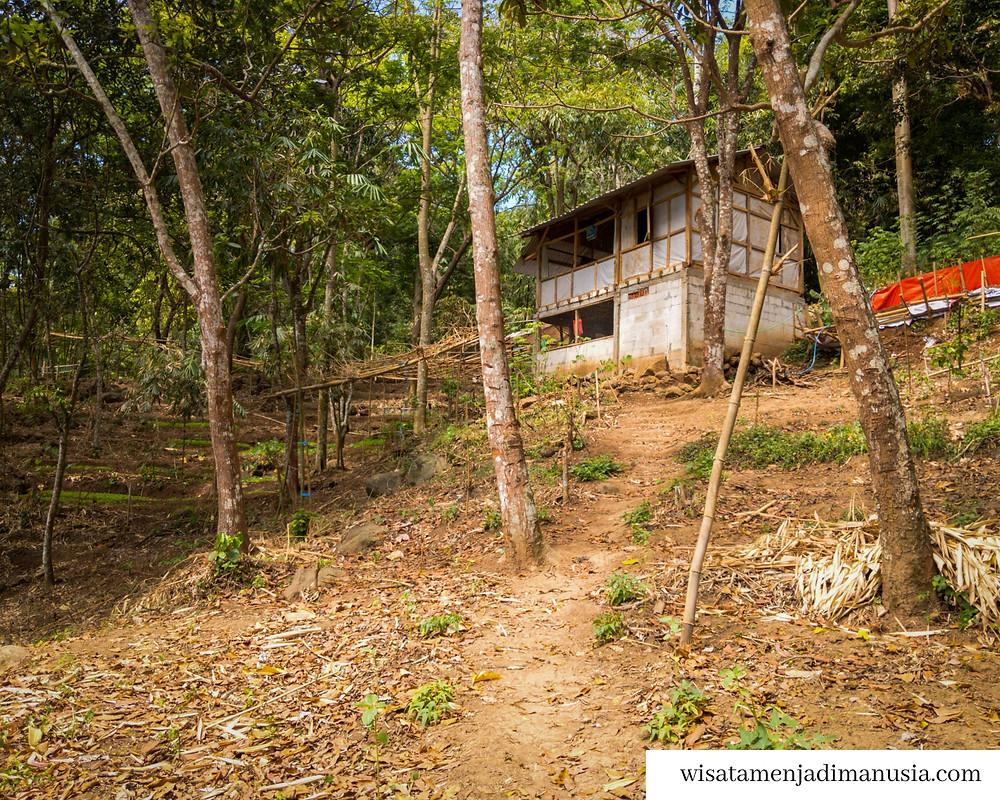 Rumah penebang kayu hutan di sekitar Jolotundo