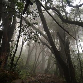 Sensasi Tek-Tok di Gunung Gede-Bagian 2